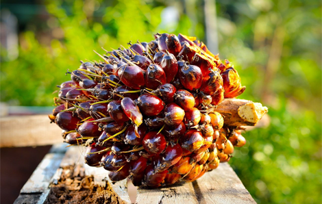 RBD Palm Oil Production In Indonesia And Malaysia